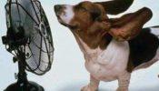 ventilador-perrete