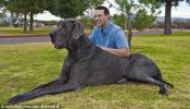 perro-grande-mundo2
