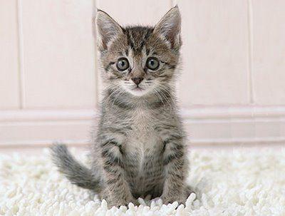 Los científicos sospechan del vínculo entre heces de gato y suicidio femenino