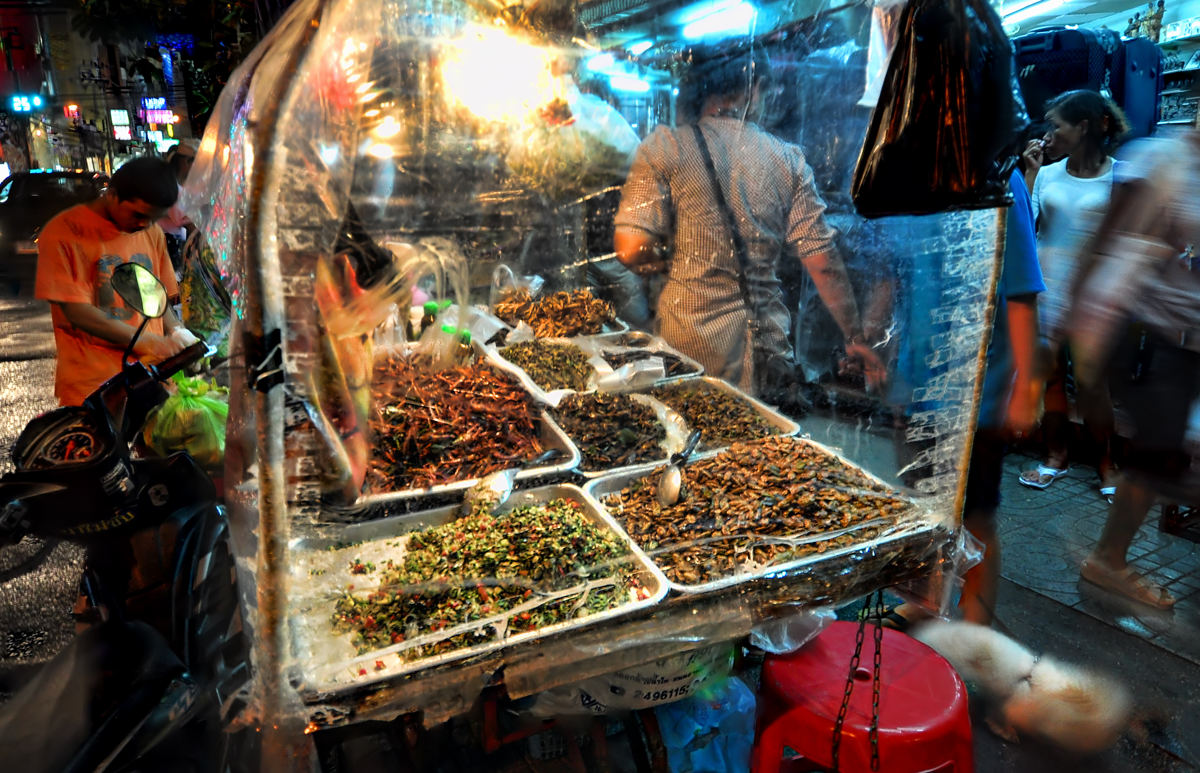 insectos-cucarachas-comida-Neimon
