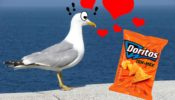 gaviota-love-doritos-web