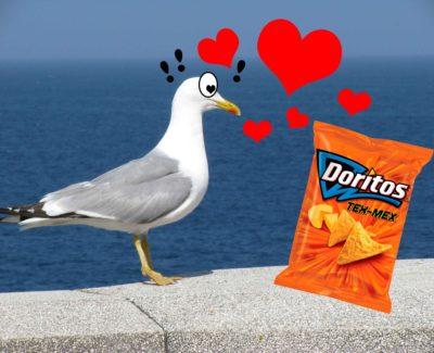 Gaviota roba bolsas de Doritos