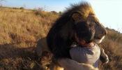 hombre-abraza-leones-video