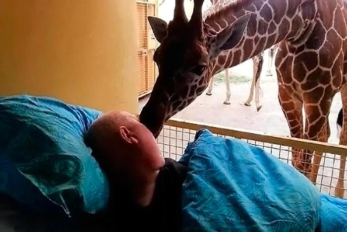 jirafa-dueño-cancer