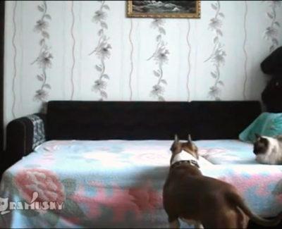 Lo que hace tu perro cuando no estás en casa