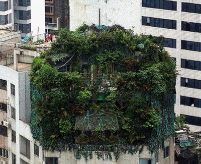 Un empresario intenta disimular con árboles la construcción de dos pisos más para su ático