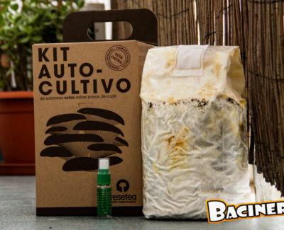 Cultiva setas en tu propia casa con el kit de autocultivo de Resetea
