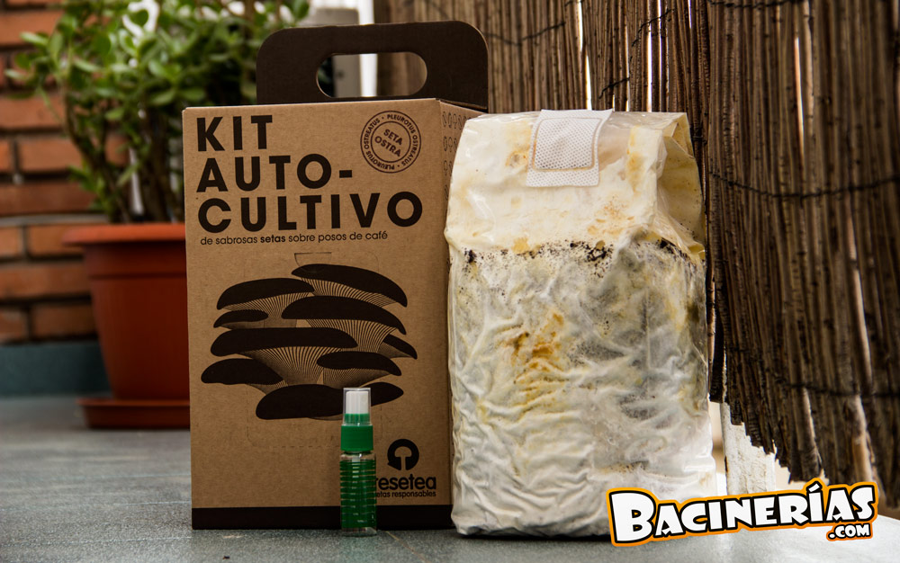 Cultiva setas en tu propia casa con el kit de autocultivo for Kit de cultivo de interior