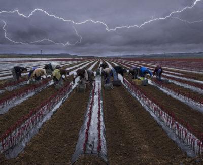 Las mejores fotografías del concurso «Mundo Rural» 2014