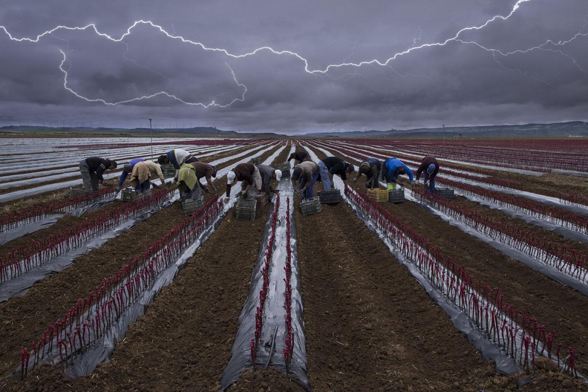 Concurso de Fotografía en el mundo rural