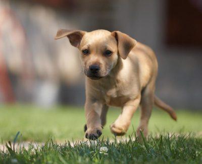 Consejos para cuidar bien a tu perro