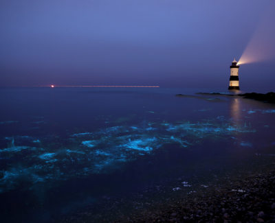 Magia en el agua: las llamadas playas bioluminiscentes